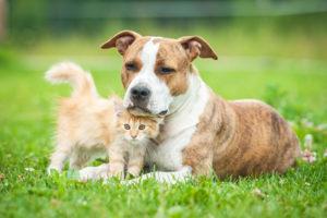 Einen Hund oder eine Katze überfahren, ist keine Fahrerflucht, sollten Sie weiterfahren.